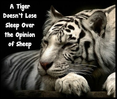 A very sleepy tiger. A tiger doesn't lose sleep over the opinions of sheep. Think about it, you you listening to those opinions?
